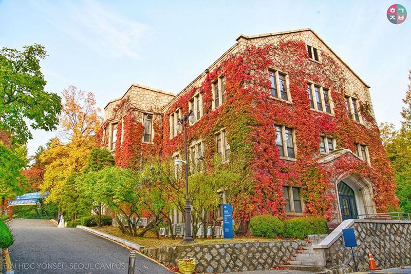 Đại học Yonsei cũng rực sắc màu khi mùa thu chạm tới(Ảnh: Lee Bui)