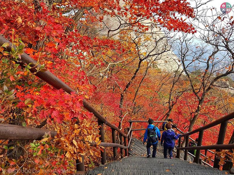 Ở một nơi khác,Vườn quốc gia Bukhansan cũng bạt ngàn lá đỏ(Ảnh: Lee Anh Tuan)