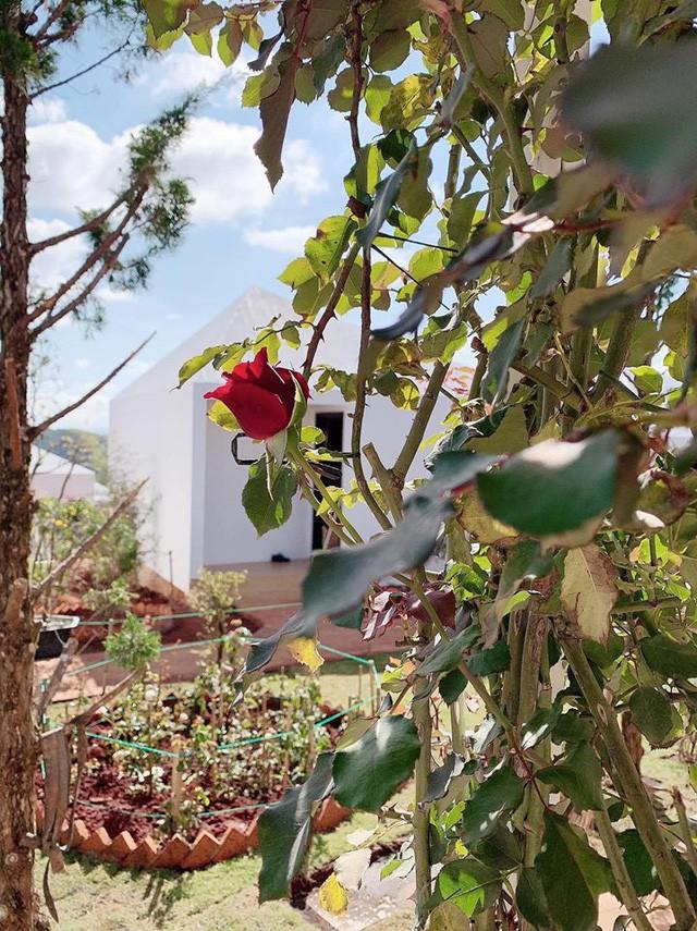 Hậu chia tay, Lý Nhã Kỳ tìm bình yên bên căn nhà đầy hoa hồng ở Đà Lạt 3