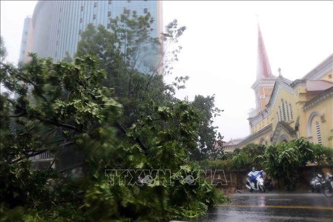 Cây xanh bị quật ngã trên đường Hà Nội, thành phố Huế. Ảnh: TTXVN