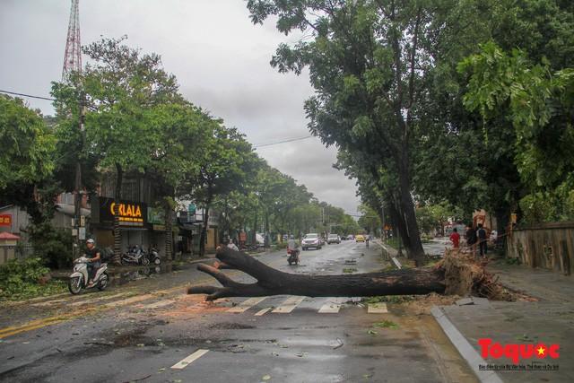 Nhiều cây xanh trên tuyến đường Hà Nội cũng bị bật gốc, chắn ngang đường. Lực lượng chức năng nhanh chóng dọn dẹp để không ảnh hưởng đến giao thông.