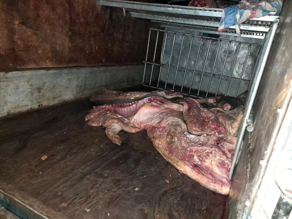 Tiêu hủy gần 1 tấn lợn mắc dịch tả lợn châu Phi chuẩn bị bán ra thị trường 0