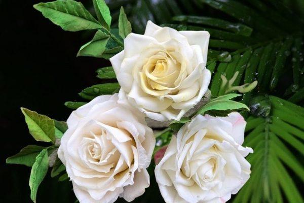 Sự thật về những bông hoa đẹp mê hồn khiến ai cũng trầm trồ tán dương 4