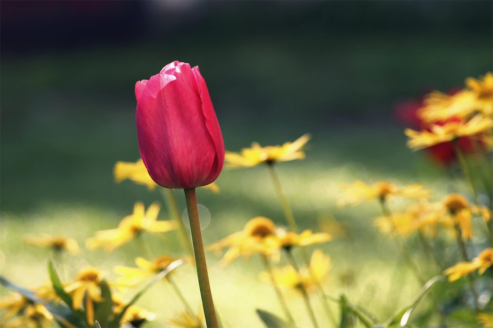 Tử vi tháng 10/2020: Tuổi Mão thuận lợi mọi bề, tuổi Mùi vướng nhiều trở ngại 2