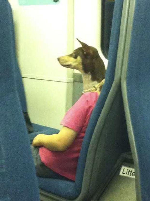 Dĩ nhiên là không chuyện thần thánh gì ở đây cả, nhưng chú chó này chắc cũng khiến nhiều người hết hồn