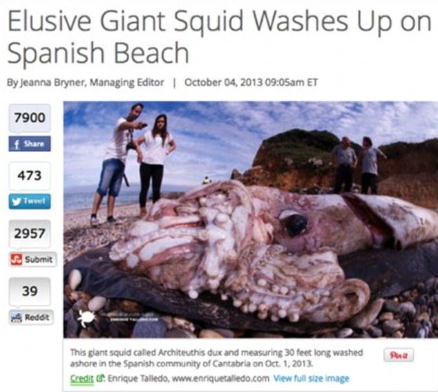 Con mực khổng lồ đó thực chất chỉ có độ dài 9m và khối lượng khoảng 180kg dạt vào bờ biển Tây Ban Nha hôm 1/10/2013.