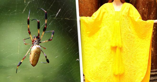 Cận cảnh tấm áo choàng làm từ tơ nhện độc nhất vô nhị.