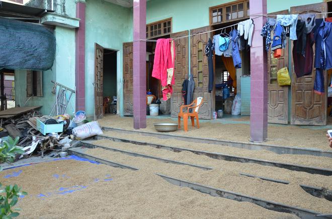 Những ngôi nhà ở thôn Tây, xã Võ Ninh đã tận dụng hết các vị trí như lề đường, sân, thềm nhà, để tập kết thóc bị ướt.