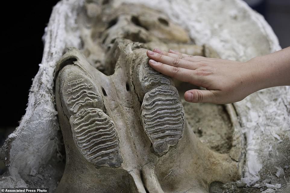 Nhiều phần xương động vật đã được hé lộ.