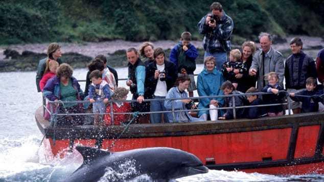 Suốt 37 năm qua, khách du lịch thường xuyên đi trên thuyền chiêm ngưỡng con cá heo thân thiệnFungie