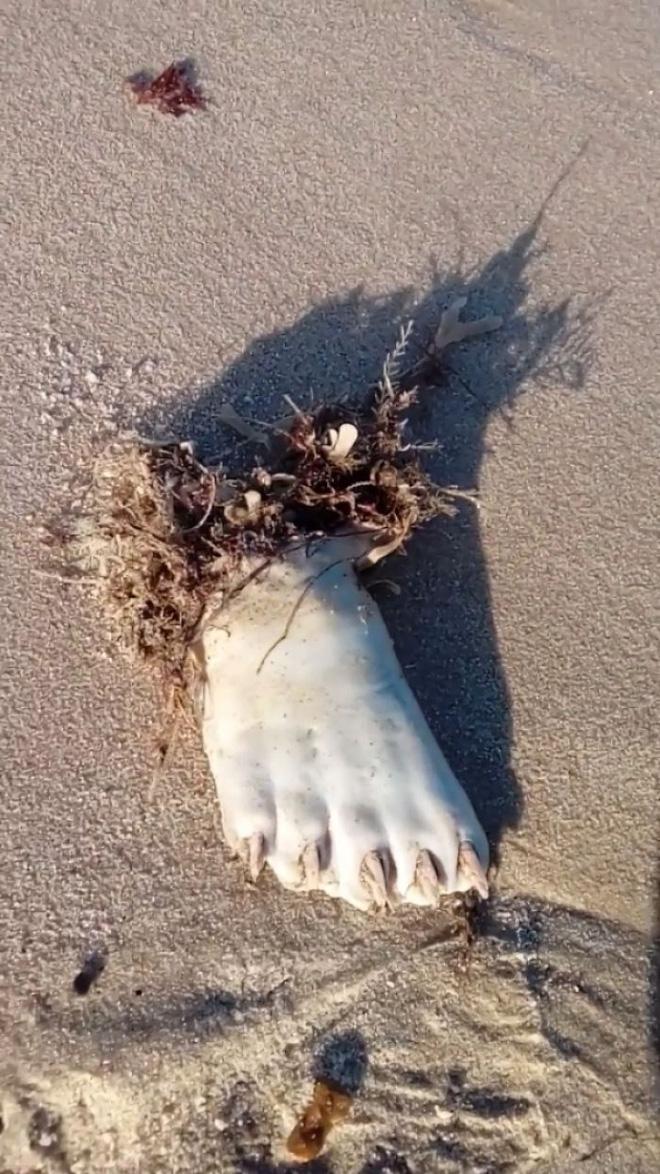 Ra biển thấy 1 bàn chân trắng ởn, anh chàng hoảng hồn lên mạng hỏi rồi ngớ người với đáp án 4