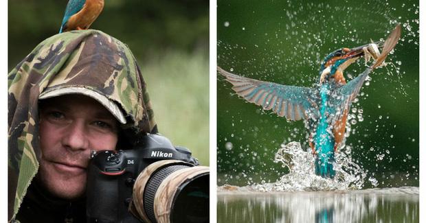 Mỗi ngày đi 'săn ảnh chim bói cá', Alan phải ngụy trang và chờ nhiều giờ đồng hồ.