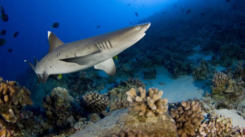 Đi chơi khu nghỉ dưỡng Ai Cập, du khách bất ngờ bị cá mập tấn công 1