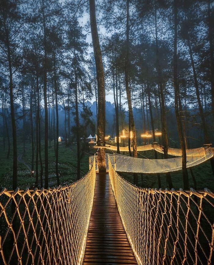 Cây cầu uốn lượn xung quanh những gốc cây tạo khung cảnh đẹp mắt vào ban đêm