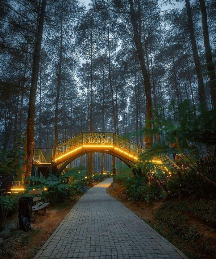 Cây cầu gỗ nổi bật trong khu rừng trồng nhiều phong lan bậc nhất ở Indonesia