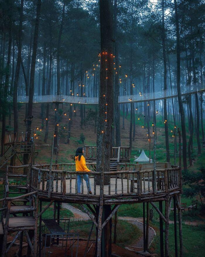 Cây cầu 'phát ánh sáng' kỳ diệu trong khu rừng Indonesia 4