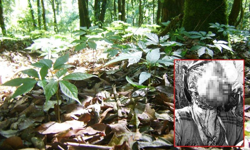 Trong lúc đi thăm vườn sâm Ngọc Linh, anh Hội (ảnh nhỏ) bị gấu rừng tấn công.
