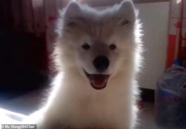 Chú chó Reno qua đời vì nhiều bệnh.