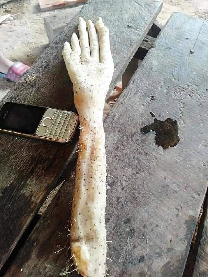 Củ khoai kỳ lạ có hình dáng giống bàn tay người khổng lồ khiến cộng đồng mạng xôn xao 0