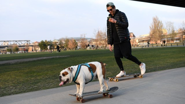 Huấn luyện chó có thể ngửi được ''mùi'' Covid-19 6