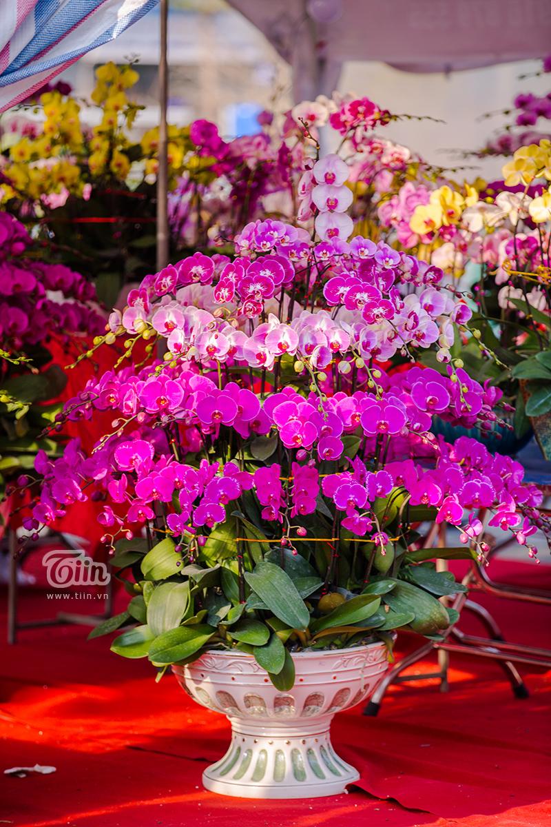 Hoa đào, mai, quất đua sắc khắp phố phường Hà Nội, 'Tết tết tết tết đến rồi!' 12
