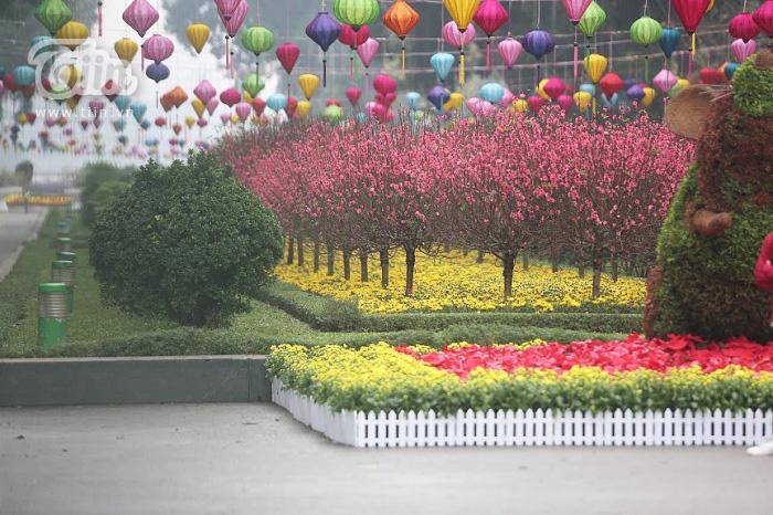 Khu vực công viên Thống Nhất lung linh rực rỡ bởi sắc hoa tươi