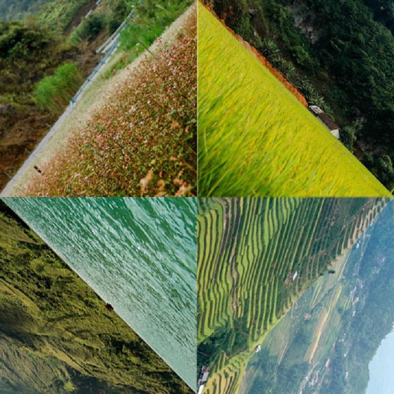 Cánh đồng hoa tam giác mạch - đồng lúa - sông Nho Quế và ruộng bậc thang ở Hà Giang(Ảnh:Hà Hiển)