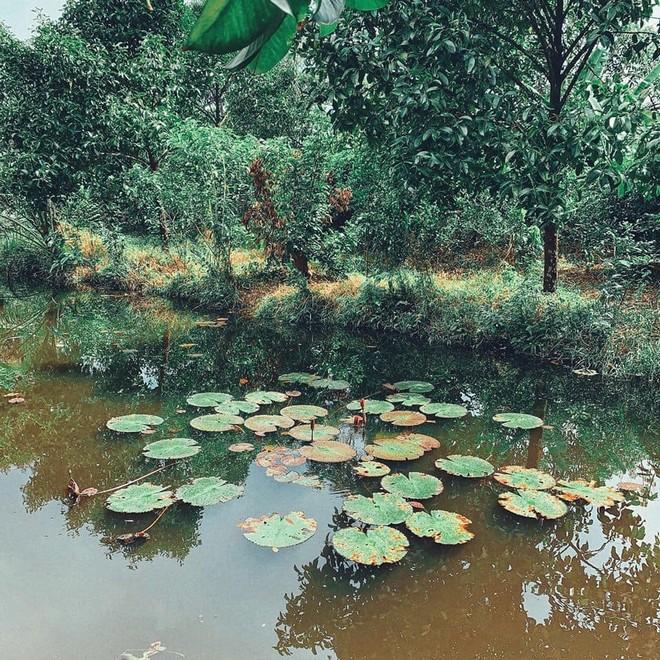Homestay 'trần trụi' với thiên nhiên ở Cần Thơ cho du khách về với miệt vườn đúng nghĩa 3