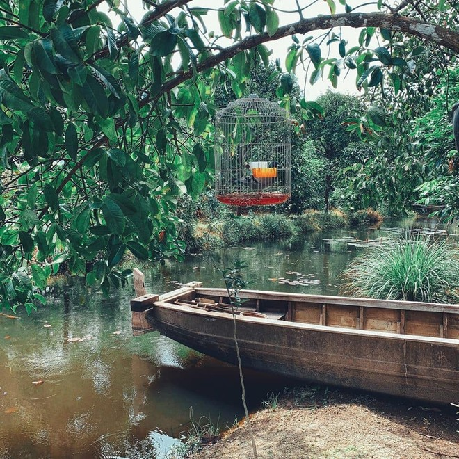 Không gian bên ngoài miệt vườn với ao cá, thuyền, hồ sen...