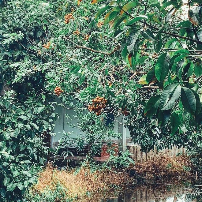 Homestay 'trần trụi' với thiên nhiên ở Cần Thơ cho du khách về với miệt vườn đúng nghĩa 10