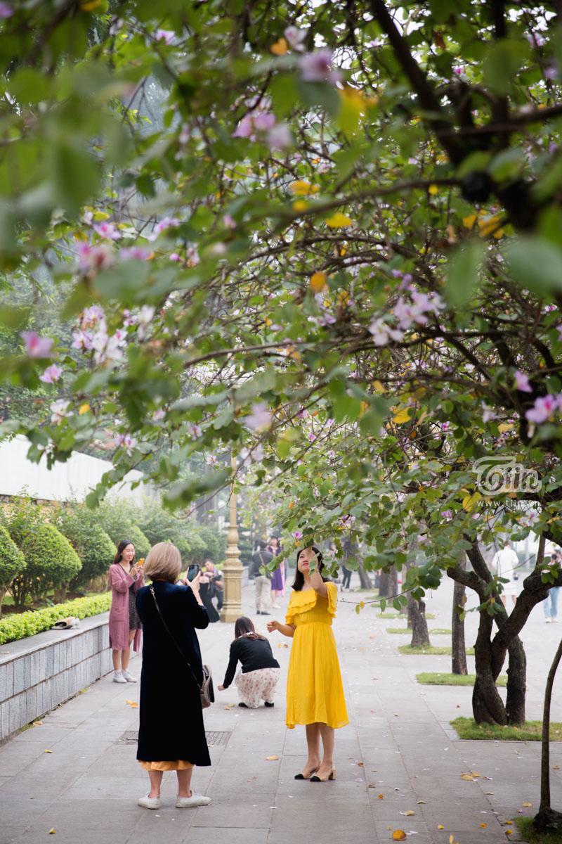 Nhiều bạn trẻ tranh thủ khoảng thời gian ngắn hoa ban nở rực rỡ, chuẩn bị trang phụcxinh đẹp để chụp ảnh, lưu giữ những khoảnh khắc đẹp nhất trong mùa hoa ban này.