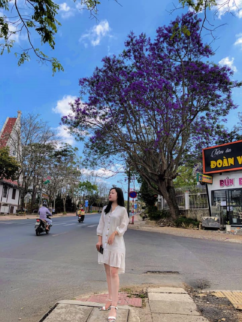 Nhanh chân tới ngay Đà Lạt trước khi mùa phượng tím tàn để có 1001 bức ảnh đẹp nhé!