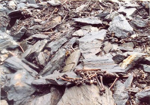 Thiên nhiên kì bí: Bí mật 'vùng đất chứa 800 bộ hài cốt' và loài nấm ma thuật kinh dị nhất mọi thời đại 1
