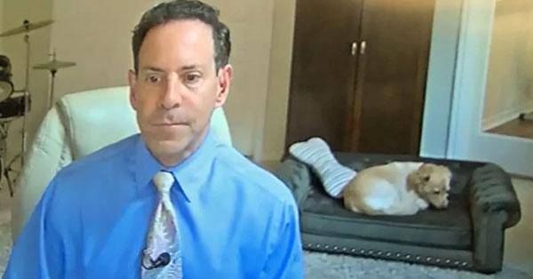 Chú chó bất ngờ nổi tiếng khi nằm ngủ trên sofa lúc chủ nhân dẫn bản tin thời tiết trên truyền hình 1