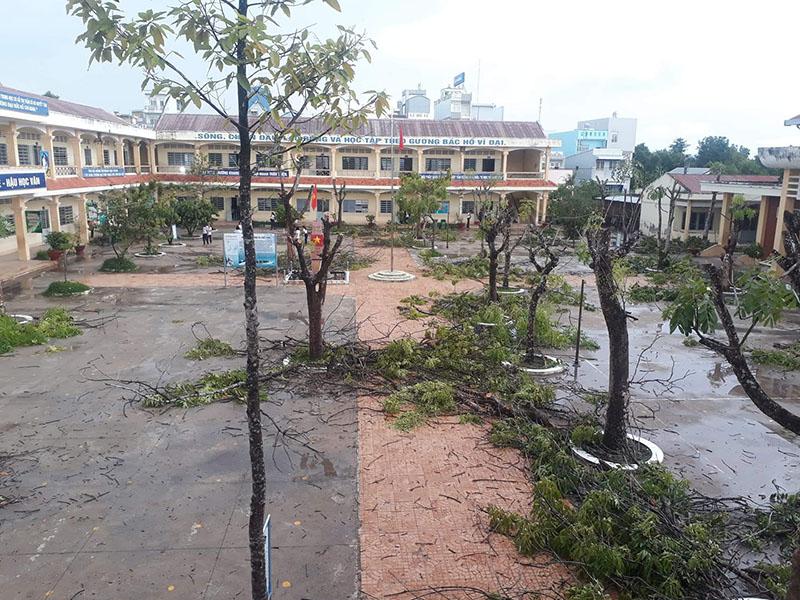 THPT Hà Huy Giáp (Cần Thơ) đã tỉa bớt cành, chặt bỏ những cây già nuatrong sân - Ảnh Vy Khánh