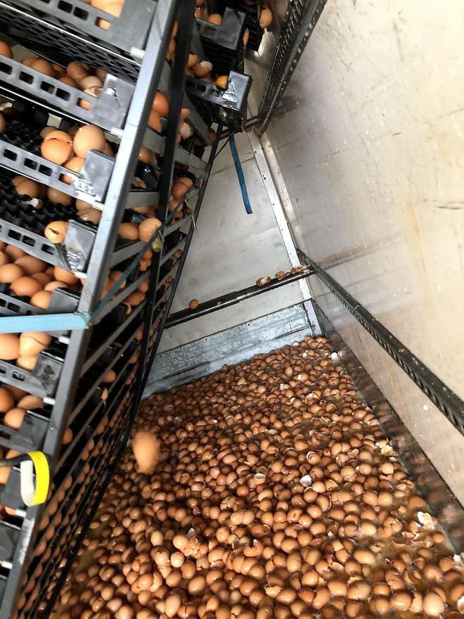 12. Đây xứng đáng là 1 cảnh tượng đau thương nhất nơi làm việc: Có ai đó đã quên không buộc những cái giá đựng trứng trên xe tải lại. Và kết quả là có 10.500 quả trứng đã vỡ tan tành.