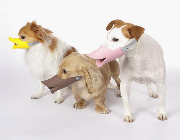 'Mỏ vịt' bảo vệ chó vô cùng đáng yêu giúp chủ nhân không lo về diện mạo của thú cưng khi ra đường phải rọ mõm