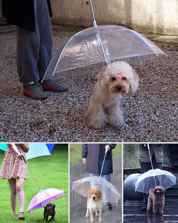Một thiết kế độc đáo dành riêng cho thú cưng khi đi ra ngoài trời mưa