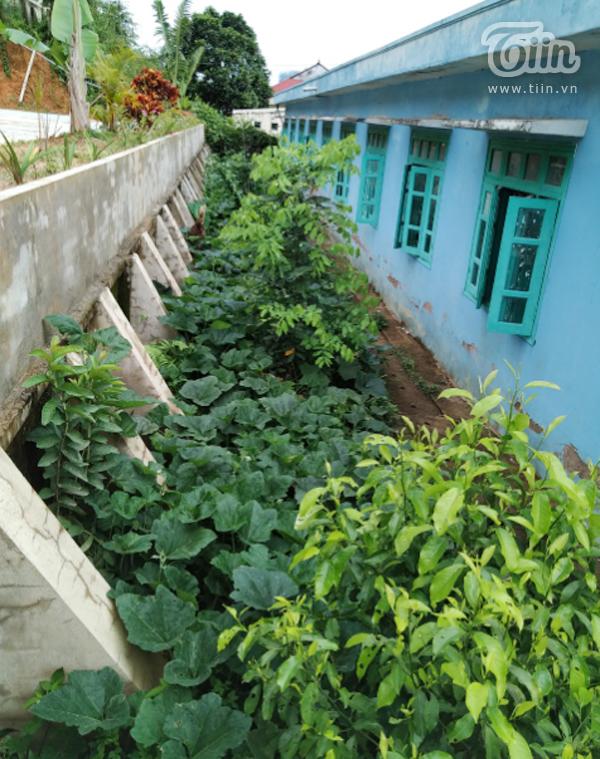 Không chỉ cải tạo ngôi trường đẹp hơn, các thầy cô ở Nậm Mạnh còn tận dụng đất để trồng rau. Vì đất ở đây chủ yếu là sỏi đá nên để có được vườn rau xanh tốt và các bồn hoa rực rỡ như hiện tại các thầy cô phải đi thuê xe tải chở đất trồng từ nơi khác về.