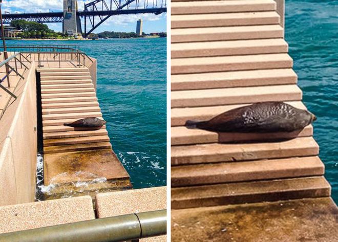 18 bức ảnh chứng minh thiên nhiên nước Úc là cả một thế giới đáng sợ đến rợn người 6