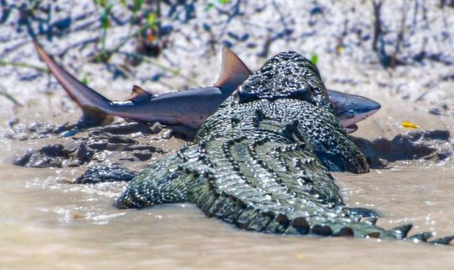 18 bức ảnh chứng minh thiên nhiên nước Úc là cả một thế giới đáng sợ đến rợn người 14