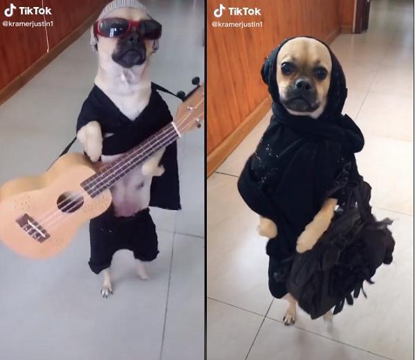 Gu ăn mặc bá đạo của chú chó.