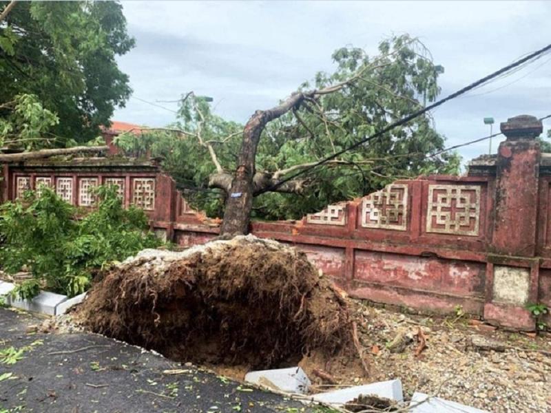 Bức tường của trường Quốc họcHuế bị sập do có cây đổ đè vào