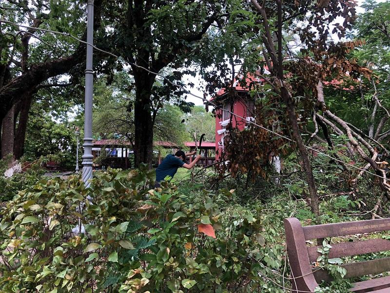Nhiều cây xanh trong khuôn viên trường đều bị đổ