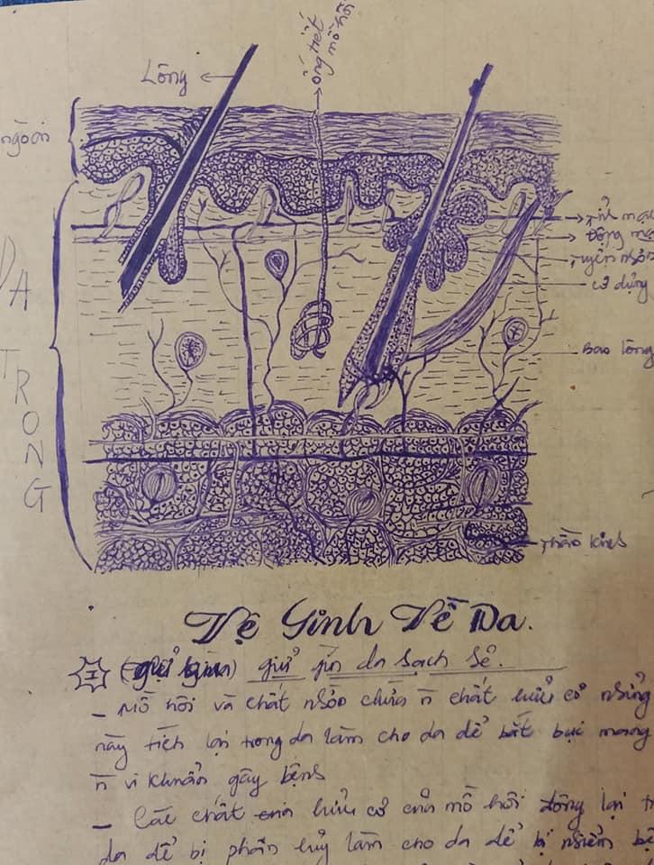 Khi phụ huynh trổ tài vẽ minh họa trên vở Sinh học: Chi tiết và tỉ mỉ tới nỗi sinh viên y khoa cũng phải bái phục 1