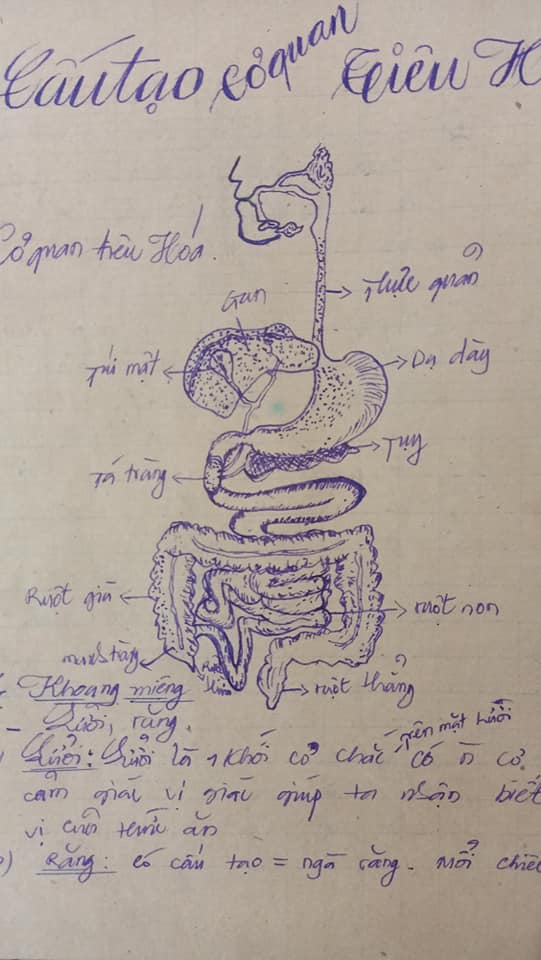 Khi phụ huynh trổ tài vẽ minh họa trên vở Sinh học: Chi tiết và tỉ mỉ tới nỗi sinh viên y khoa cũng phải bái phục 2