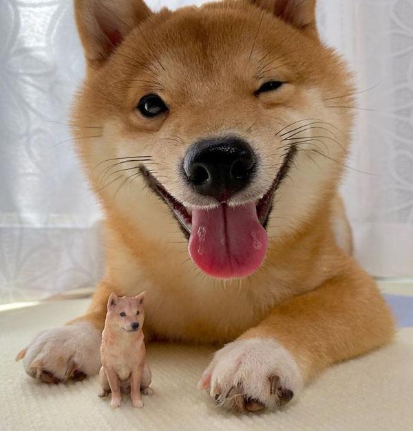Chú chó đáng yêu sở hữu nụ cười rạng rỡ khiến dân mạng đốn tim.