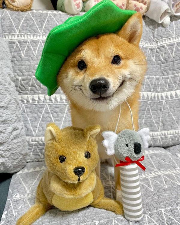Chú chó sở hữu biểu cảm 'tấu hài', thấy đồ ăn là cười toe toét 0