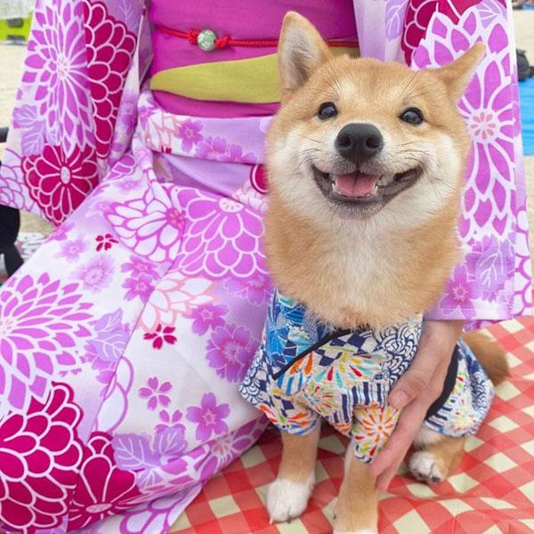 Chú chó sở hữu biểu cảm 'tấu hài', thấy đồ ăn là cười toe toét 3