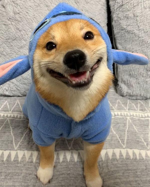 Chú chó sở hữu biểu cảm 'tấu hài', thấy đồ ăn là cười toe toét 2